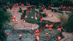 Flamingos in a pond marketing content strategy
